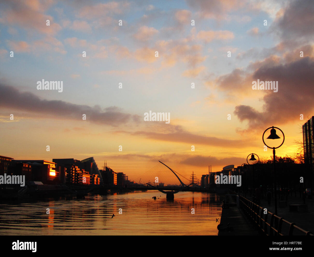 samuel beckett bridge at sunrise on the river liffey in dublin stock