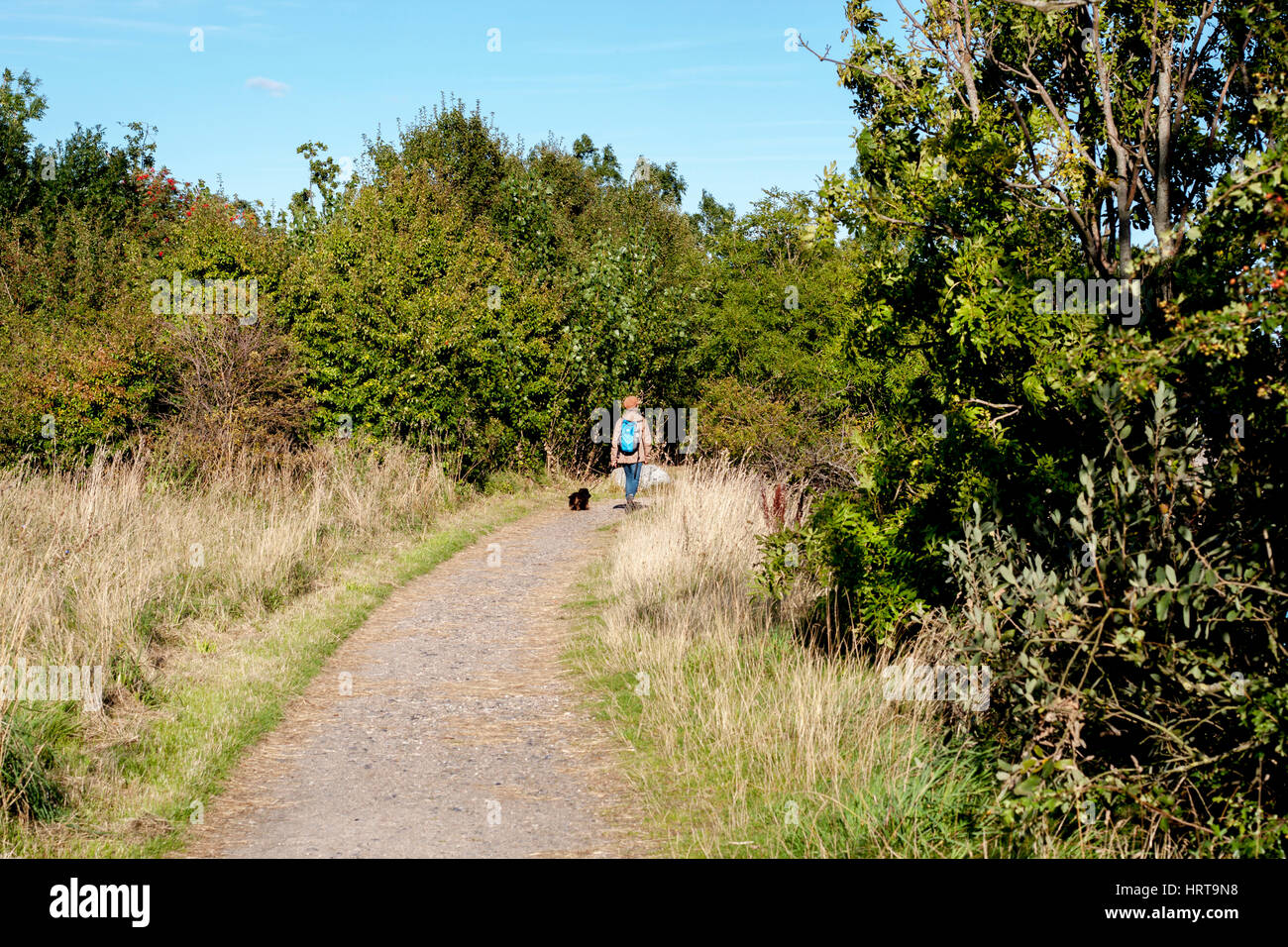 Woman wearing a brown cap and a blue backpack walking her black dog on a public path in nature. - Stock Image