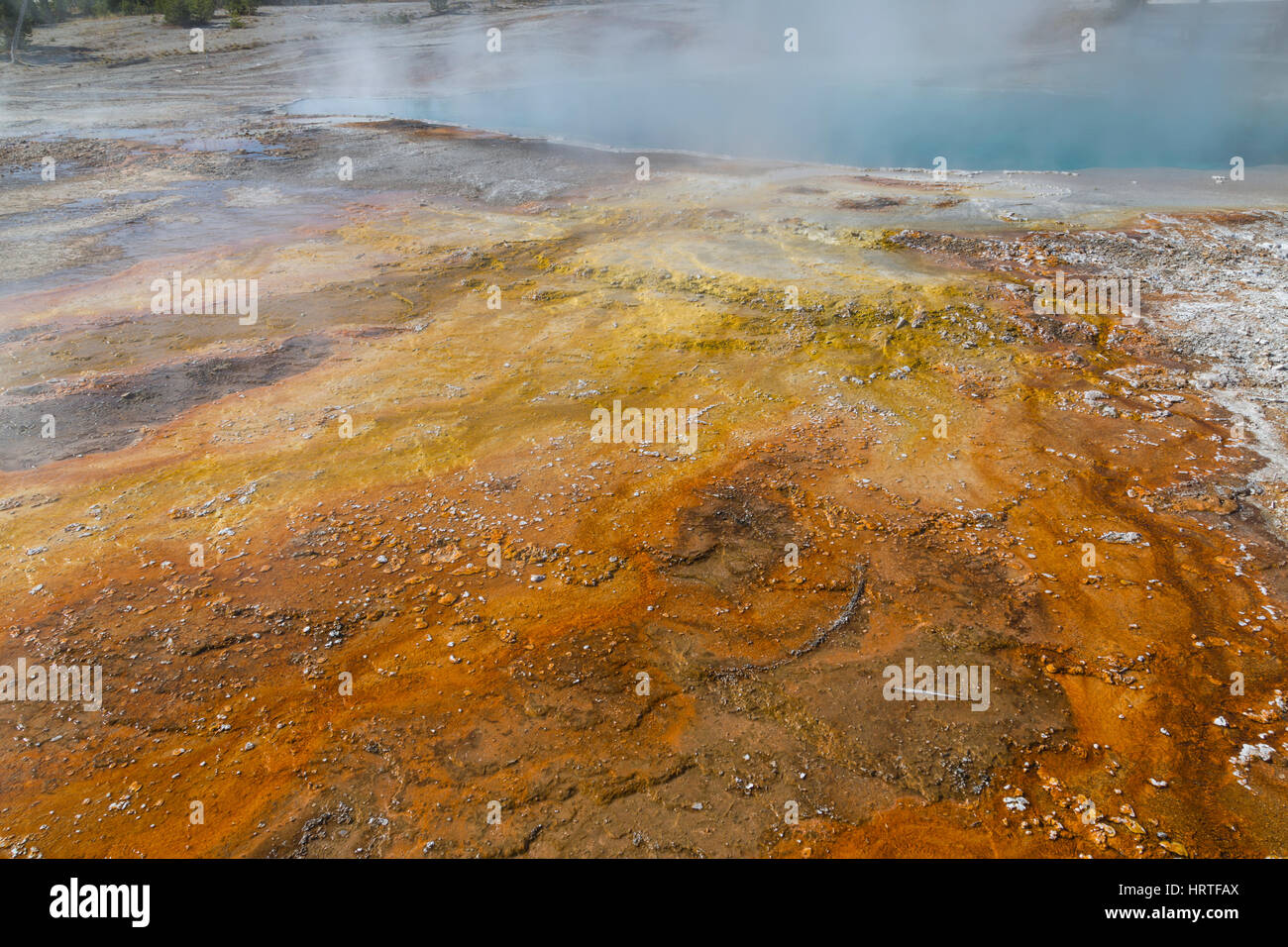 Black Pool thermal runoff in Yellowstone National Park, USA - Stock Image