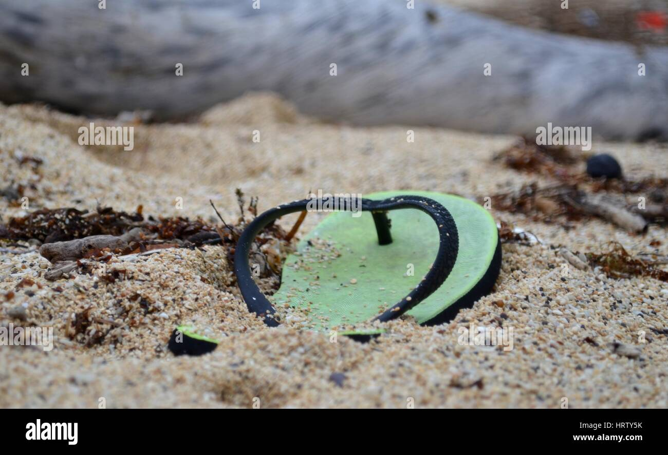 Discarded thong flip flop half buried on beach - Stock Image