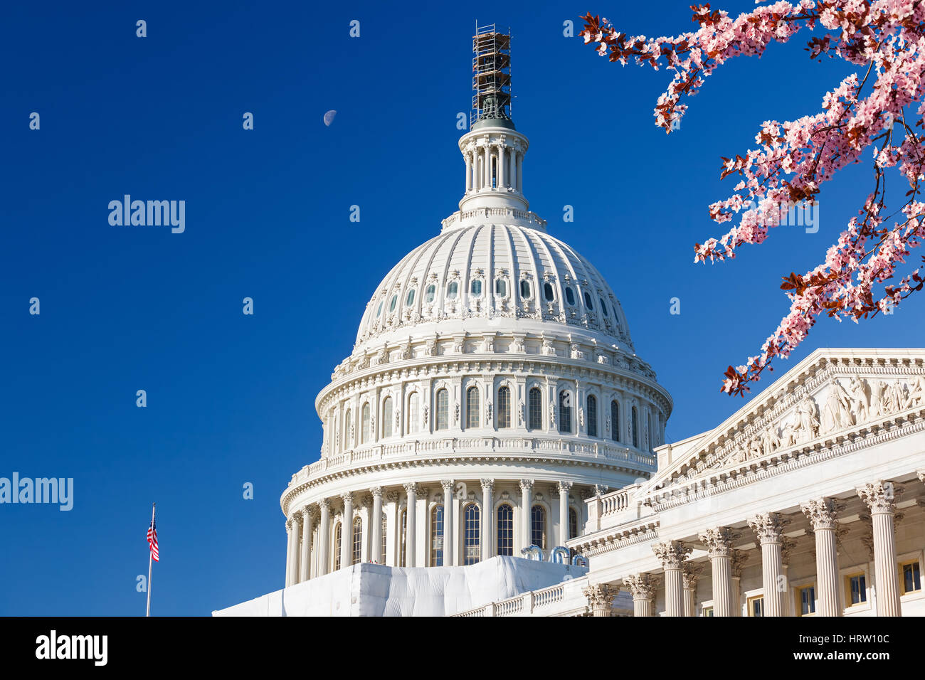 US Capitol over blue sky with blooming cherry on foregraund - Stock Image