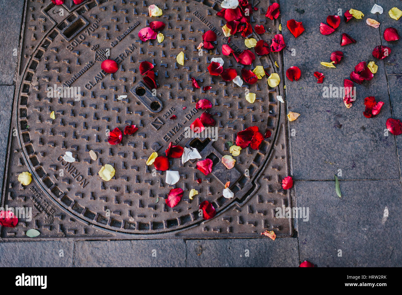 Rose petals thrown on a street in Barcelona Spain - Stock Image
