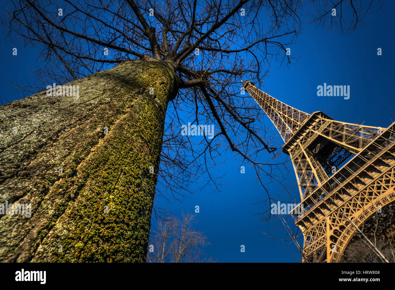 Eiffel and big Tree - Stock Image