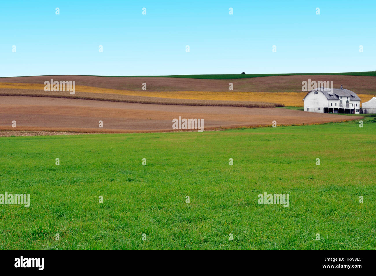 Meadows of crops and pastureland, here in the state of Pennsylvanian, USA - Stock Image