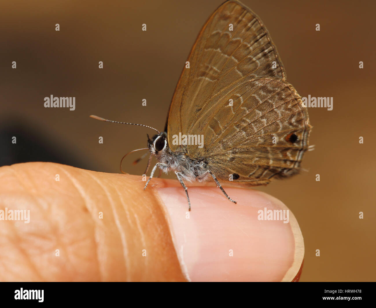 Butterfly On Finger Stock Photos & Butterfly On Finger Stock Images ...