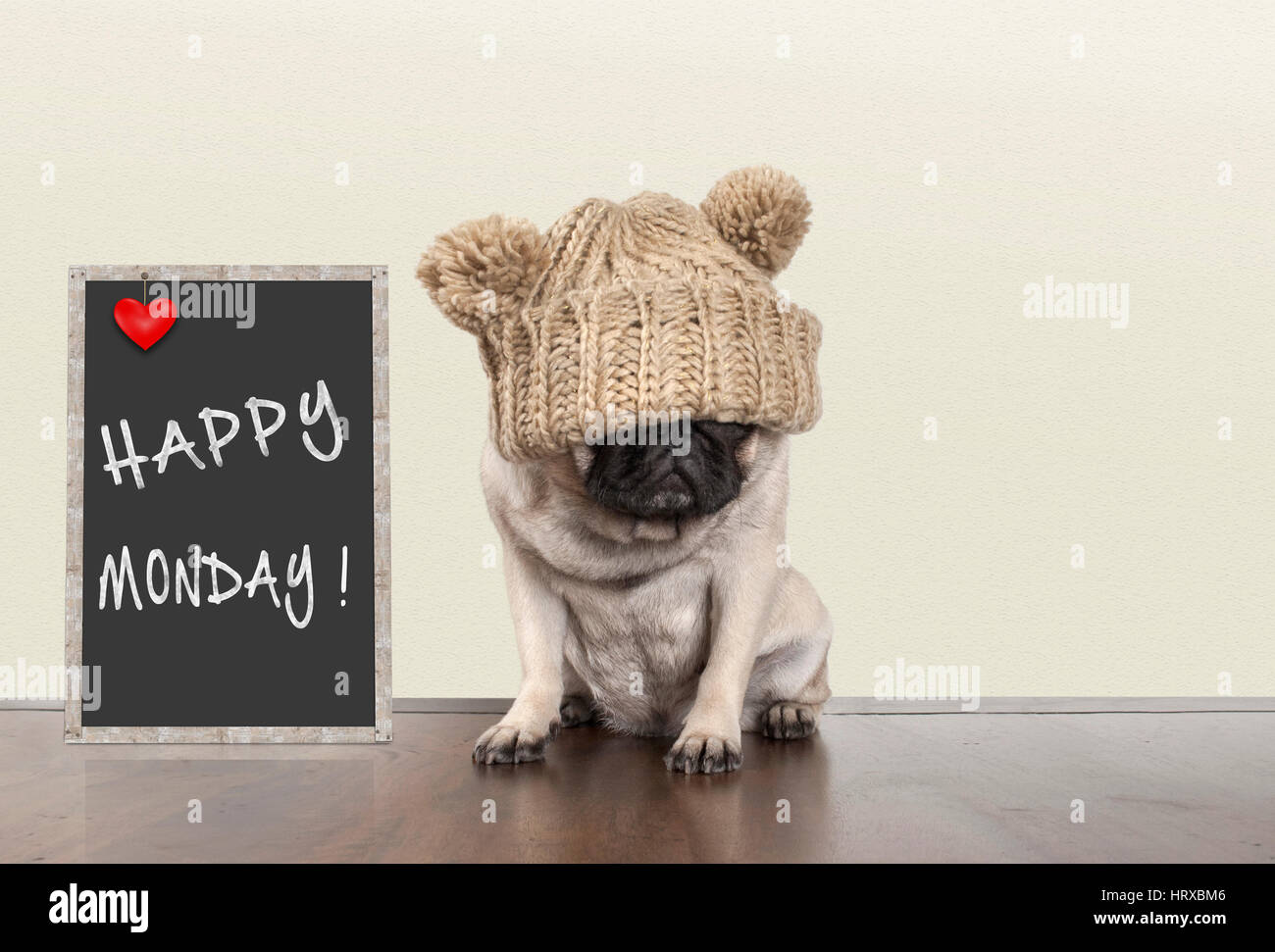cute pug puppy dog with bad monday morning mood, sitting next to blackboard sign with text happy monday, copy space Stock Photo