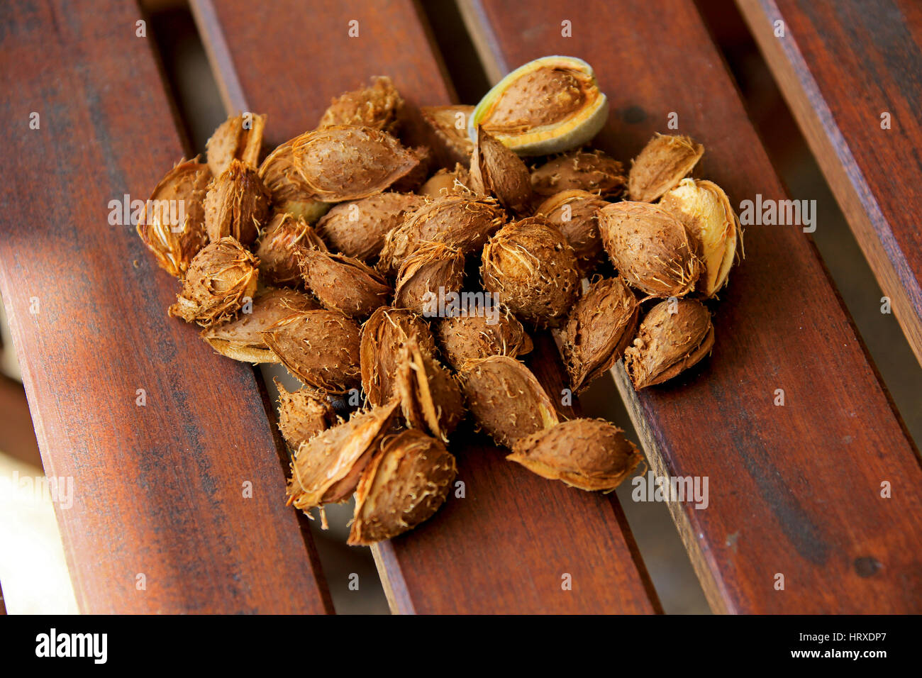 Homegrown Almonds 2 - Stock Image