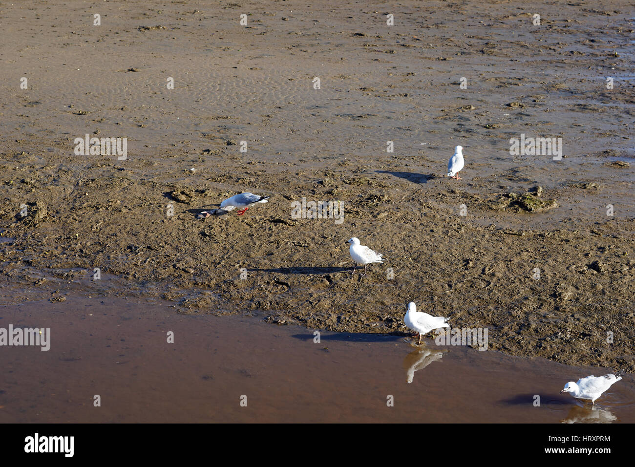 Seagulls at the beach - Stock Image