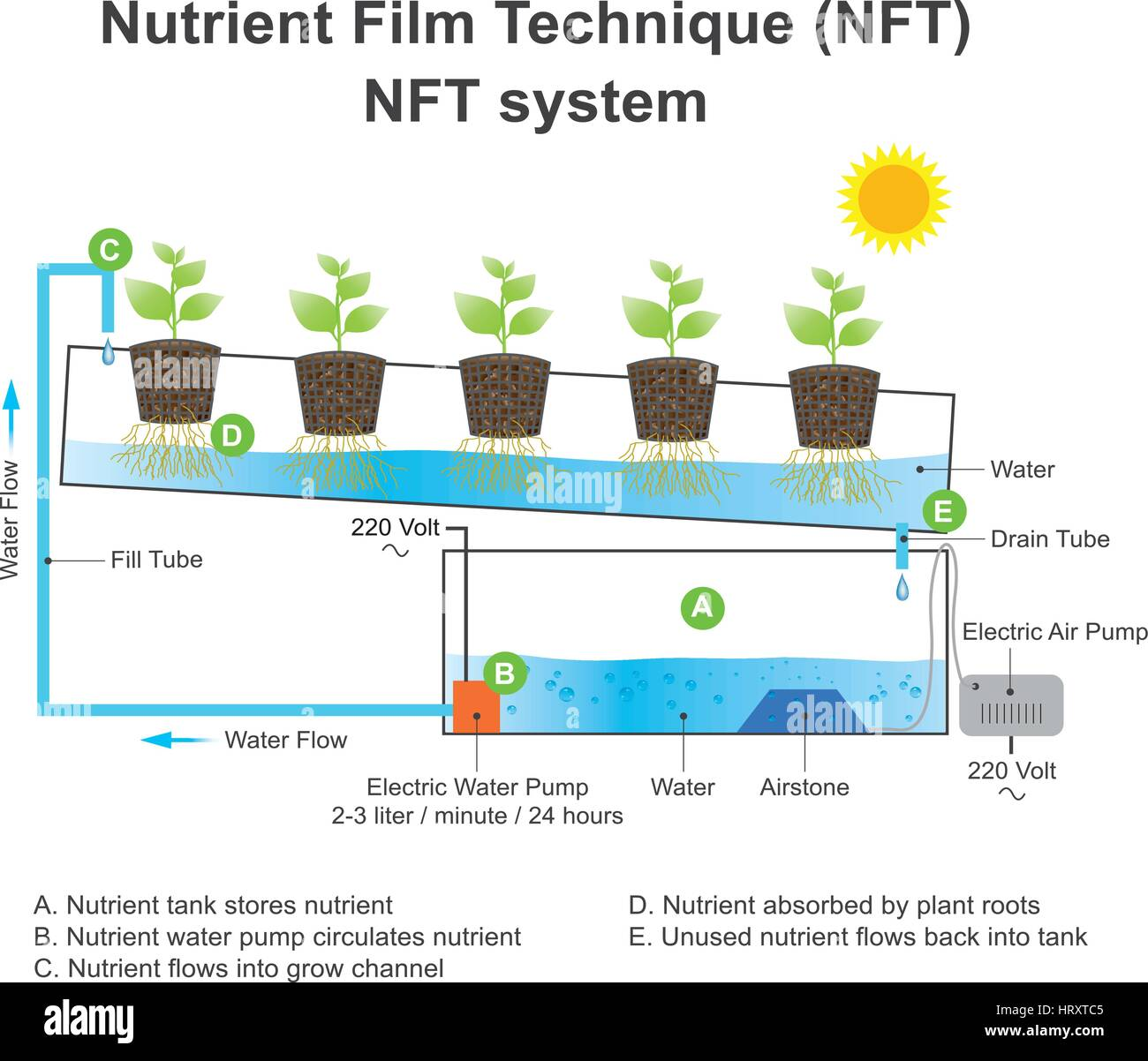 Nutrient film technique (NFT) is a hydroponic technique wherein a very shallow stream of water containing all the - Stock Image