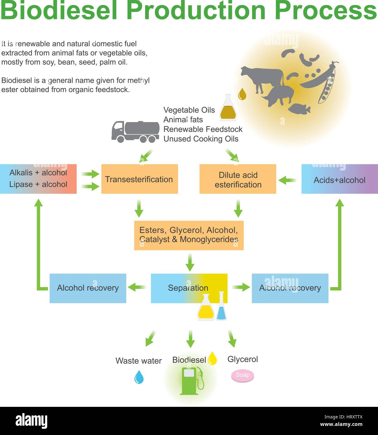 Biodiesel Production Process.It is renewable and natural domestic fuel extracted from animal fats or vegetable oils - Stock Image