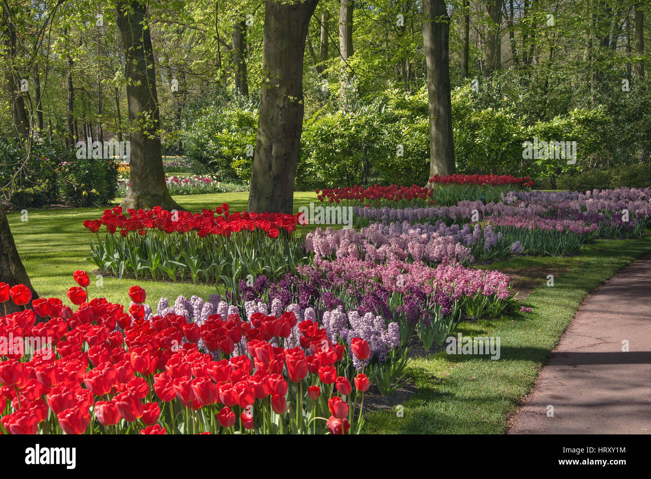 The keukenhof is de most beautiful flower park in the world stock the keukenhof is de most beautiful flower park in the world izmirmasajfo