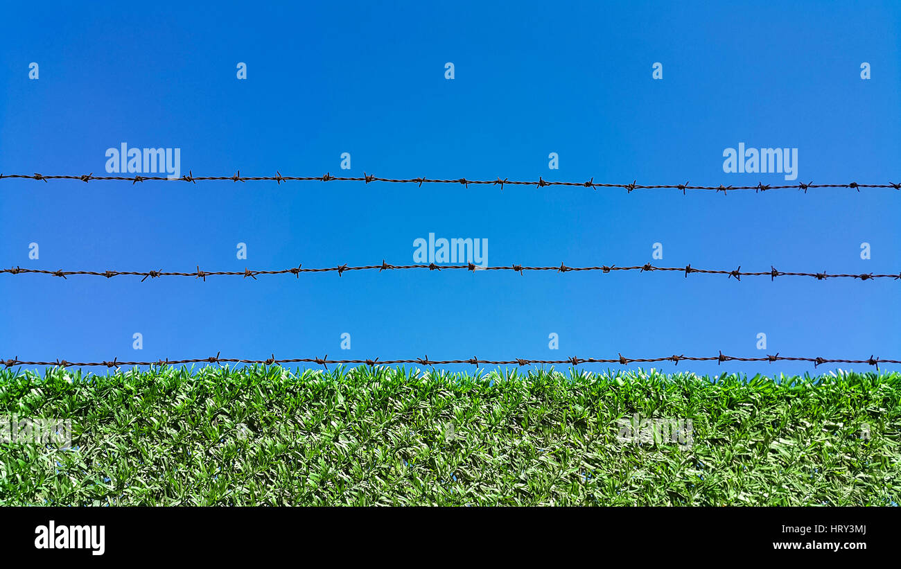 Barbed wire fence on a blue background - Stock Image