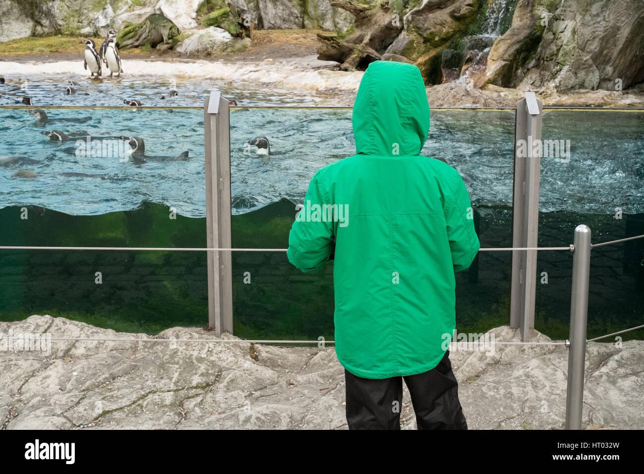 Humboldt penguin (sphenisus humboldti), Schönbrunn Zoo,Vienna, Austria, Europe. Stock Photo