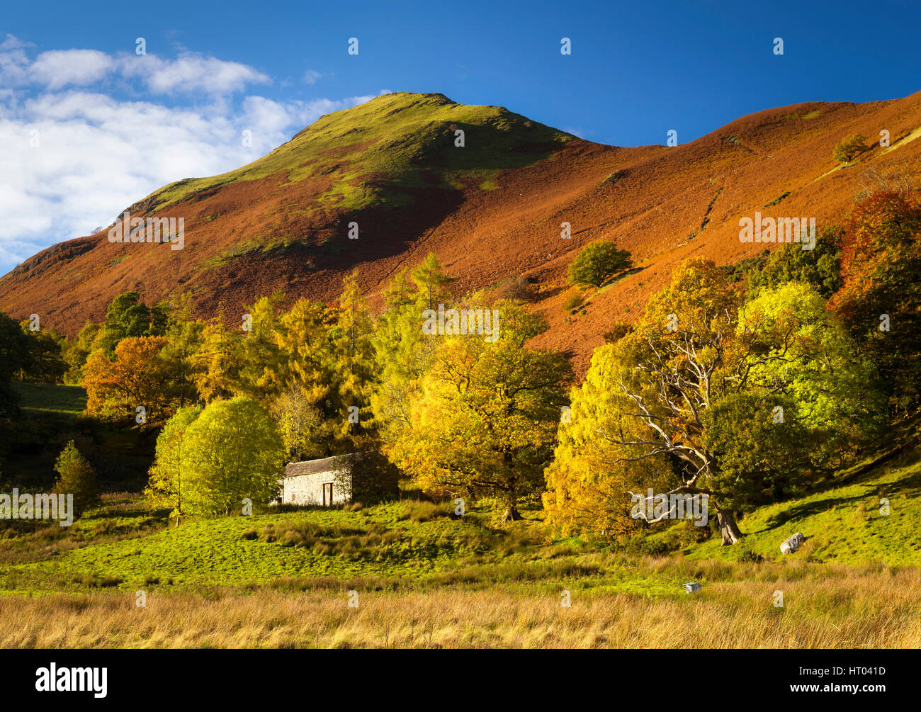 The English Lake District in Autumn. Brandlehow Park on the shore of Derwent Water with Catbells behind. - Stock Image