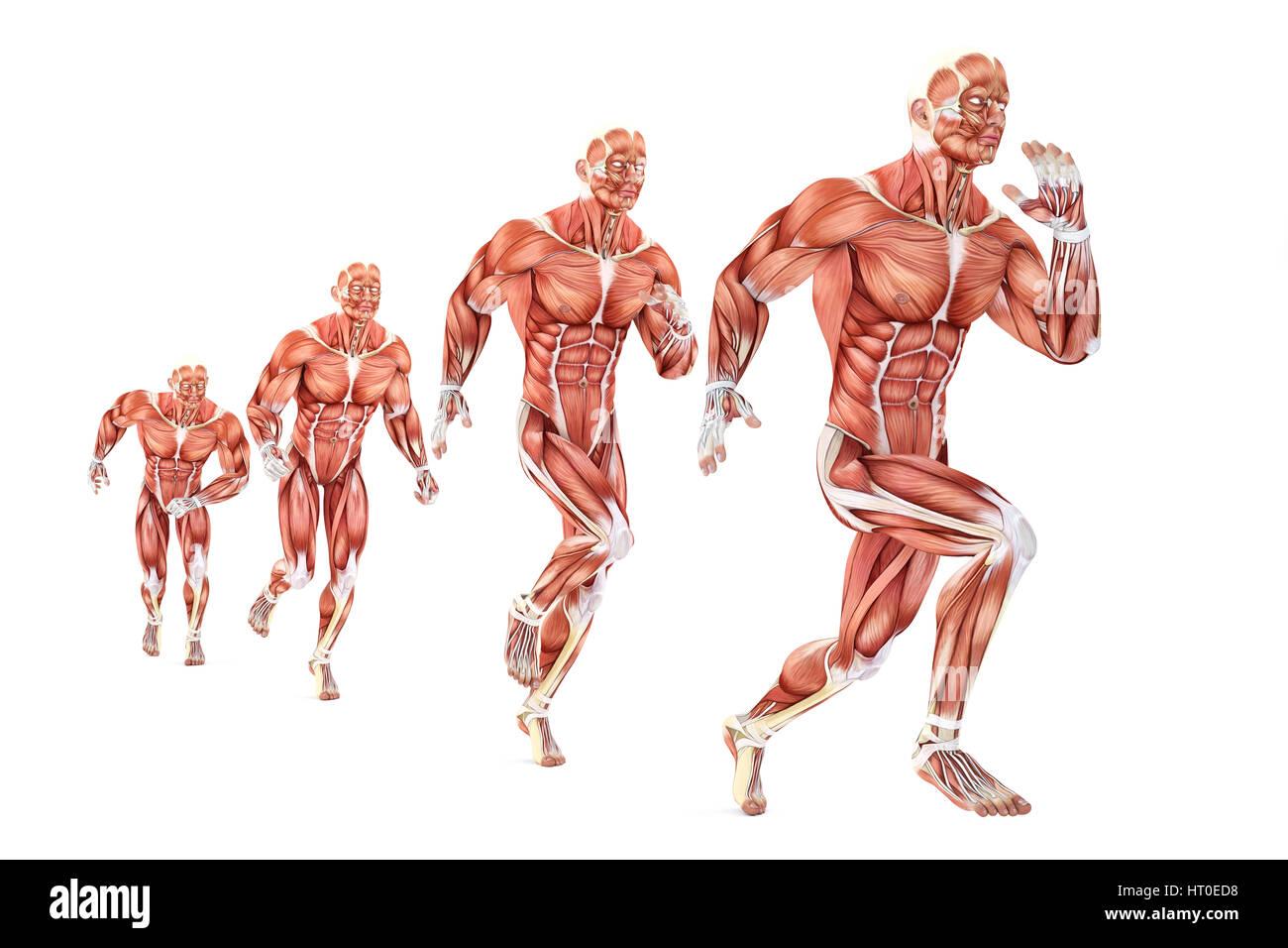 Running Man Anatomy Medical Illustration Isolated Over White Stock
