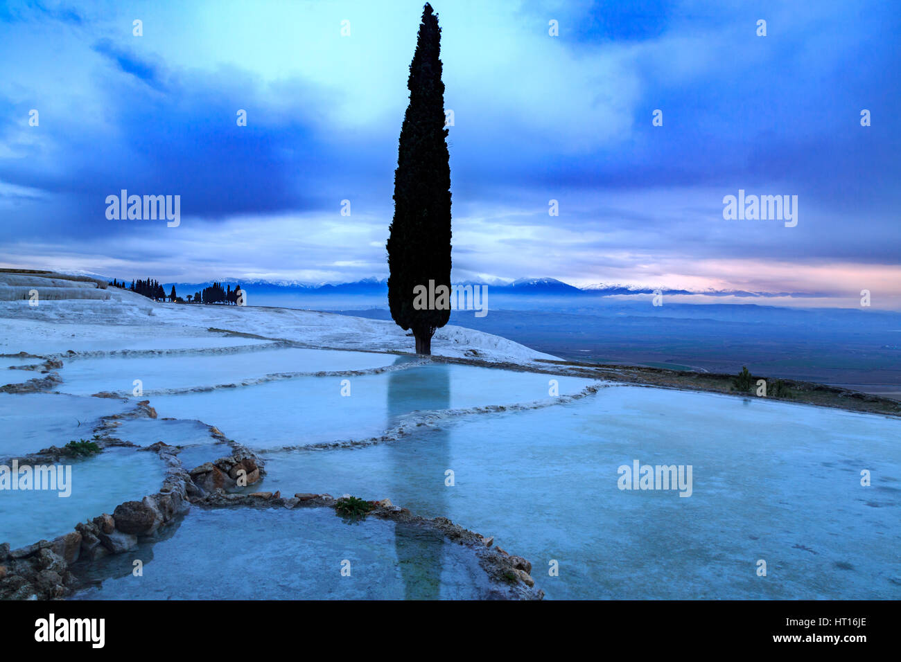 Tall pine tree reflection in Pamukkale travertines - Stock Image