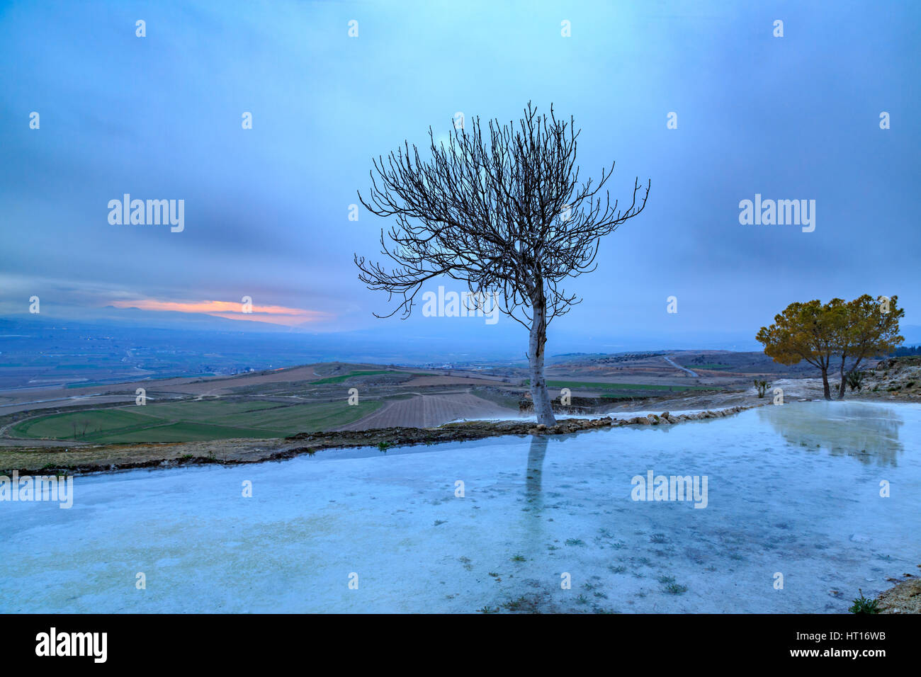 Bare tree with reflection on travertine of Pamukkale - Stock Image