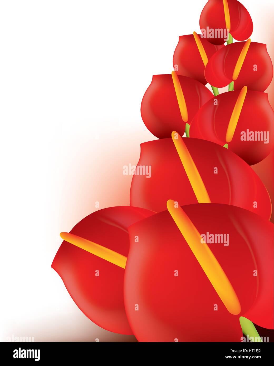 Beautiful red anthurium Beautiful red Anthurium - Stock Vector