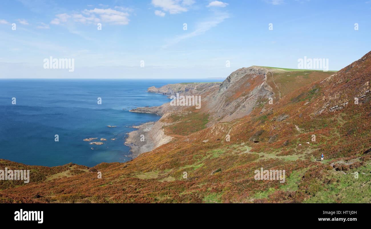 Panoramic view of cliffs and coastline from the South West Coast Path near Crackington Haven in North Cornwall, - Stock Image