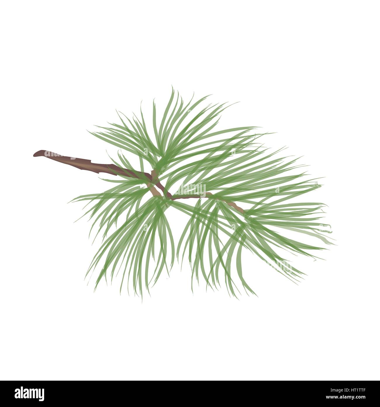 Pinecone. Pine tree branch isolated. Floral evergreen decor - Stock Image