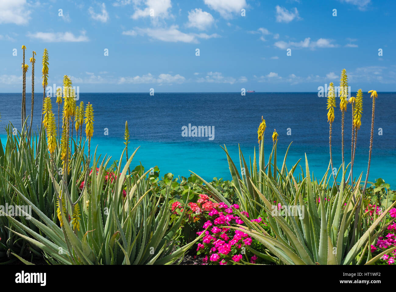 Blossoming Yellow Flowers Aloe Vera Plant And Blue Sea Curacao