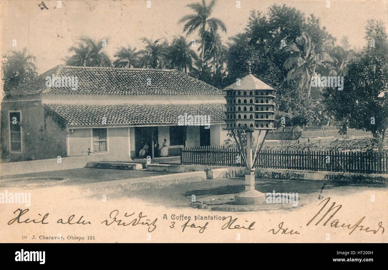 Coffee plantation, c1900. Artist: Unknown - Stock Image