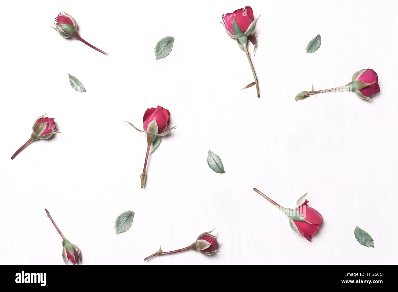The composition of red flowers pattern of pink roses on a white background.Soft focus.Type flat top Stock Photo