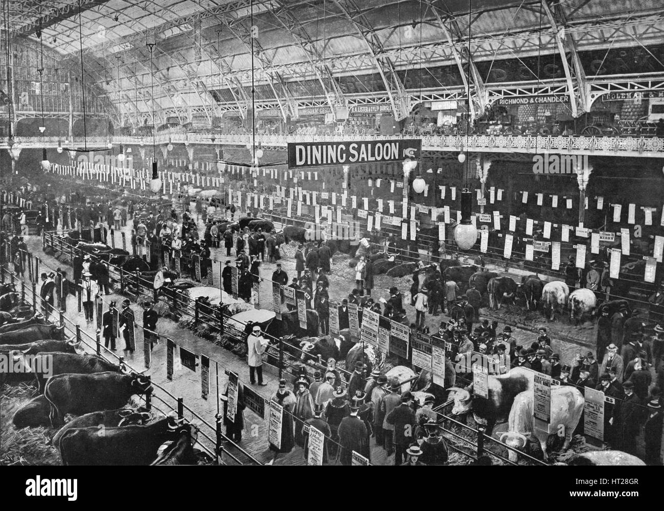 At the Smithfield Club cattle show, Agricultural Hall, Islington, London, 1902 (1903). Artist: Unknown. - Stock Image