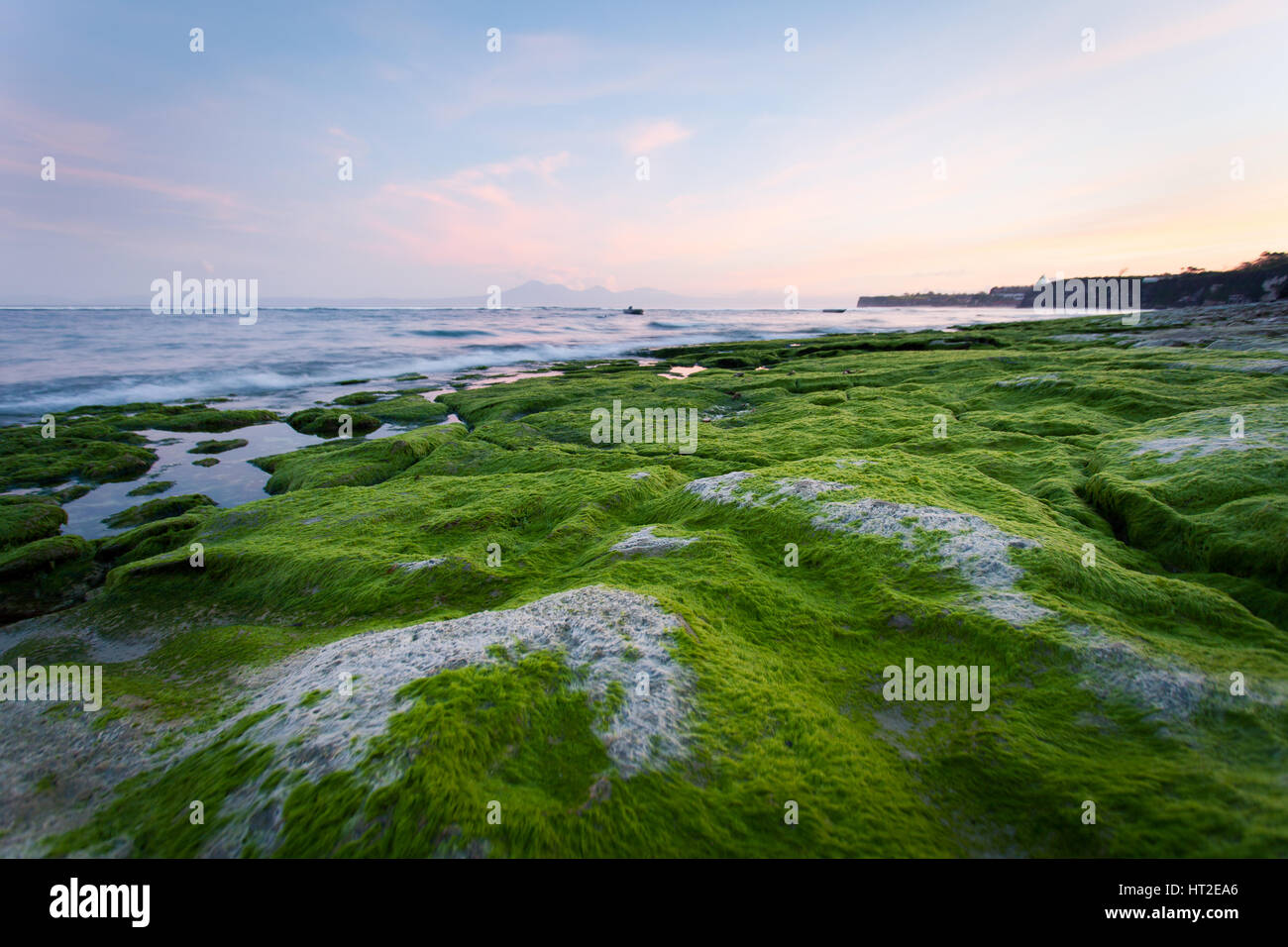 Rocky shore covered with green algae in the early morning with mountain views - Stock Image
