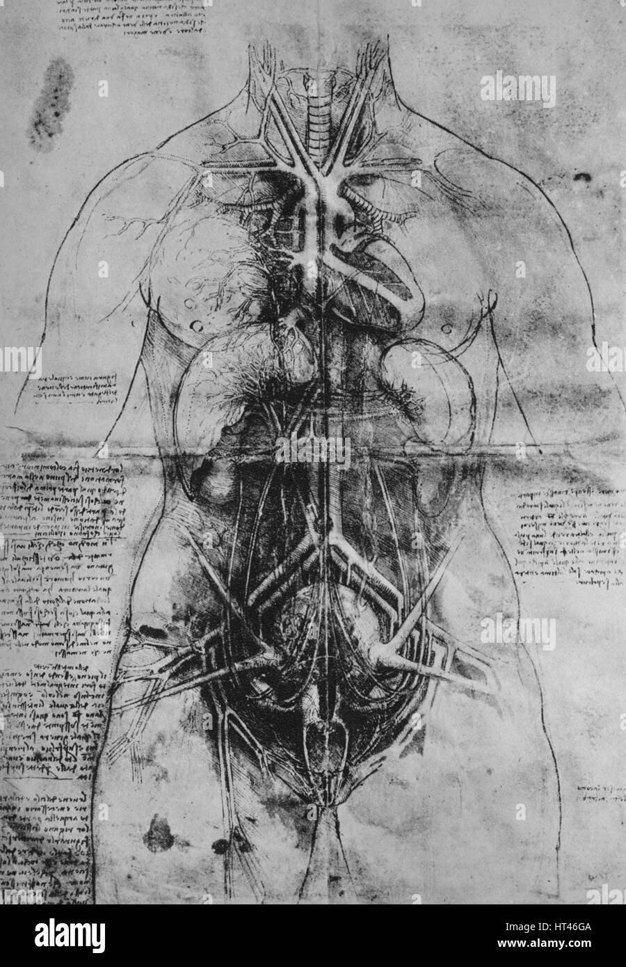 Da Vinci Female Anatomical Study Stock Photos & Da Vinci Female ...