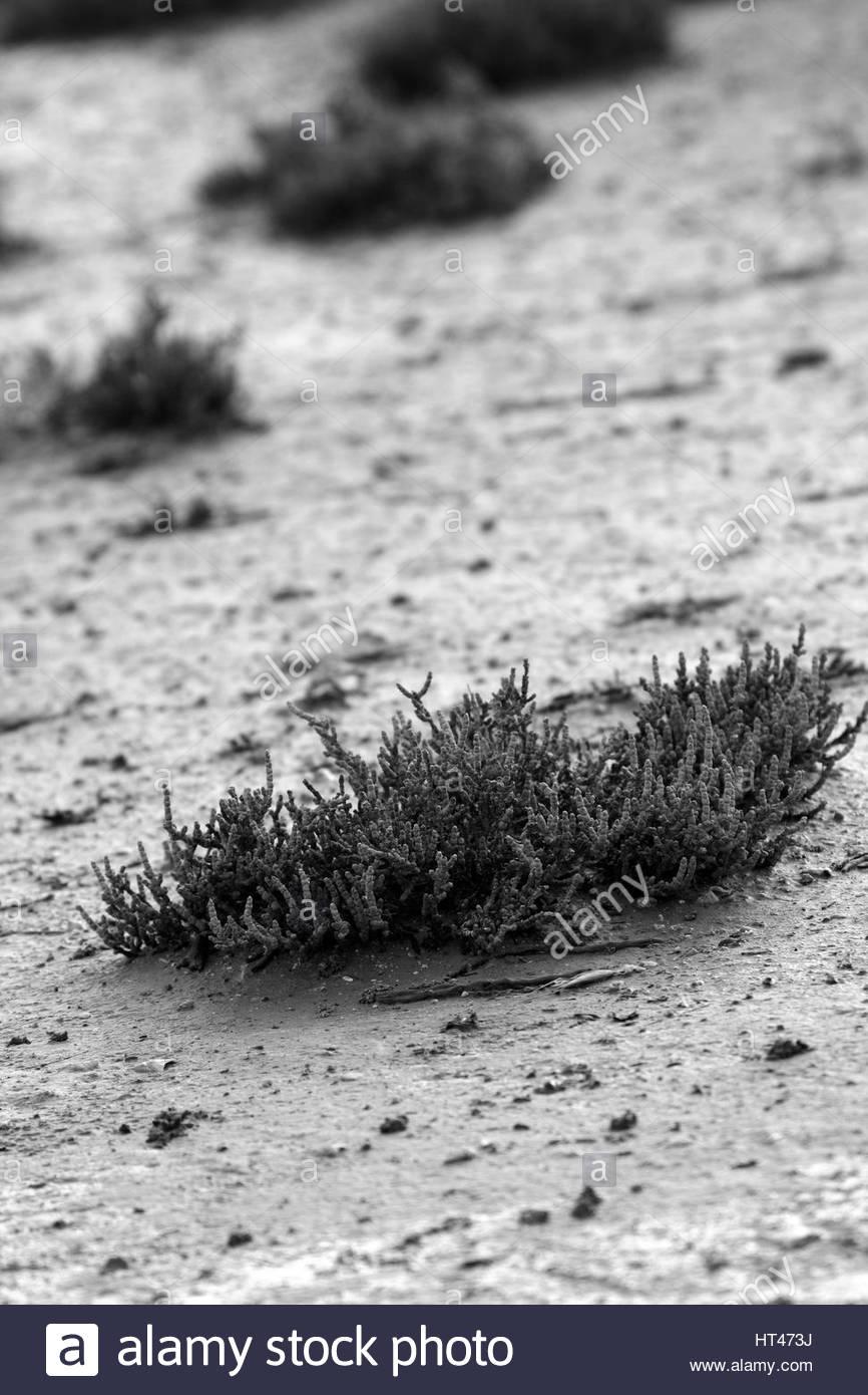 Salt lake close up - Stock Image