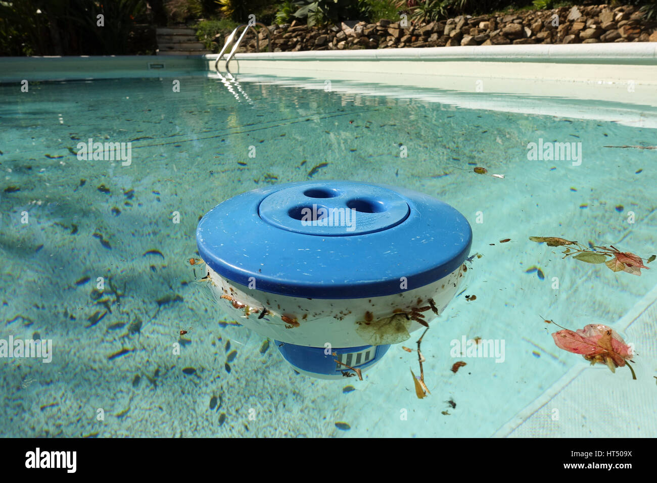 Chlorine container floating in dirty swimming pool, leaves, plastic. Stock Photo