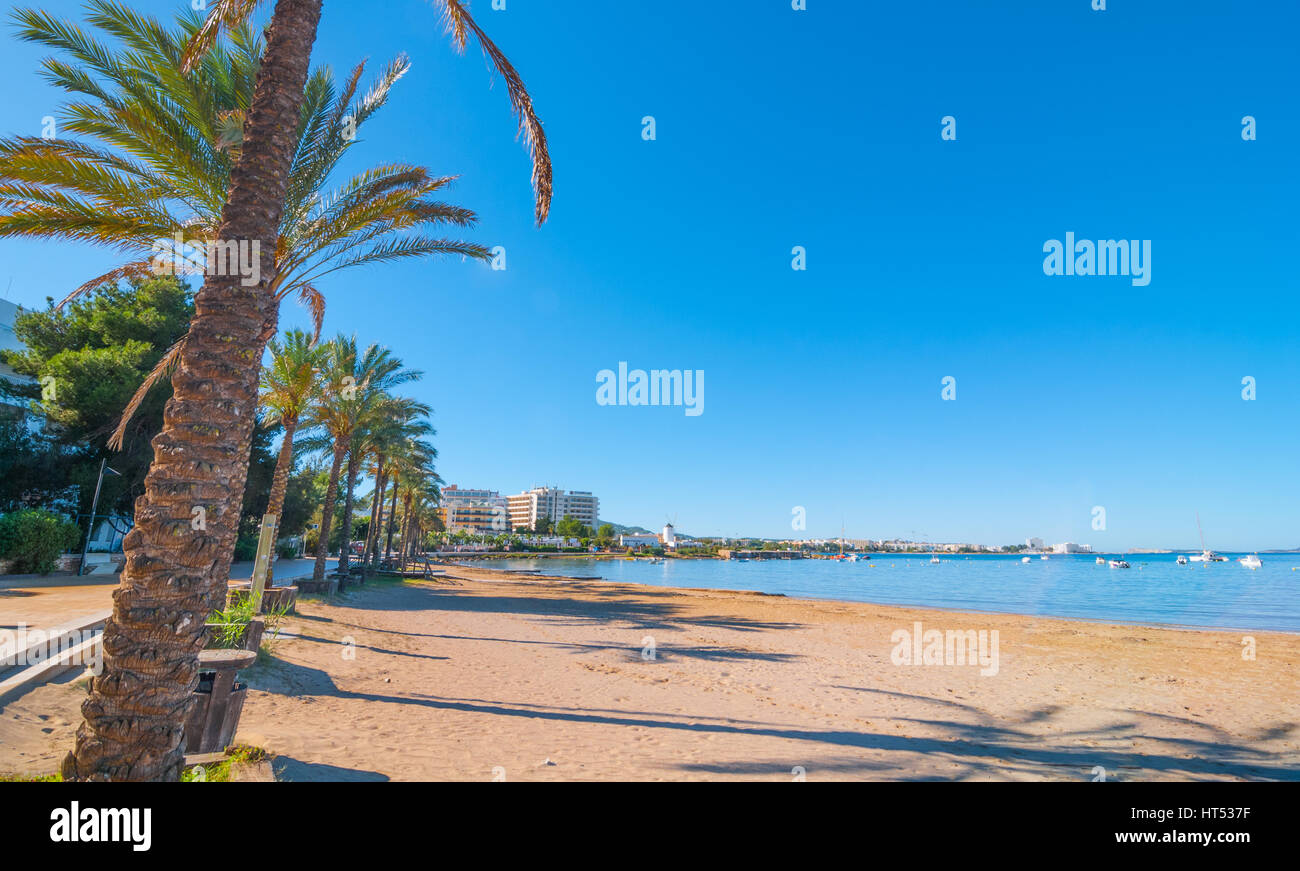 Rows of palm trees line the beach, sunny day along the water's edge in Ibiza, St Antoni de Portmany Balearic - Stock Image