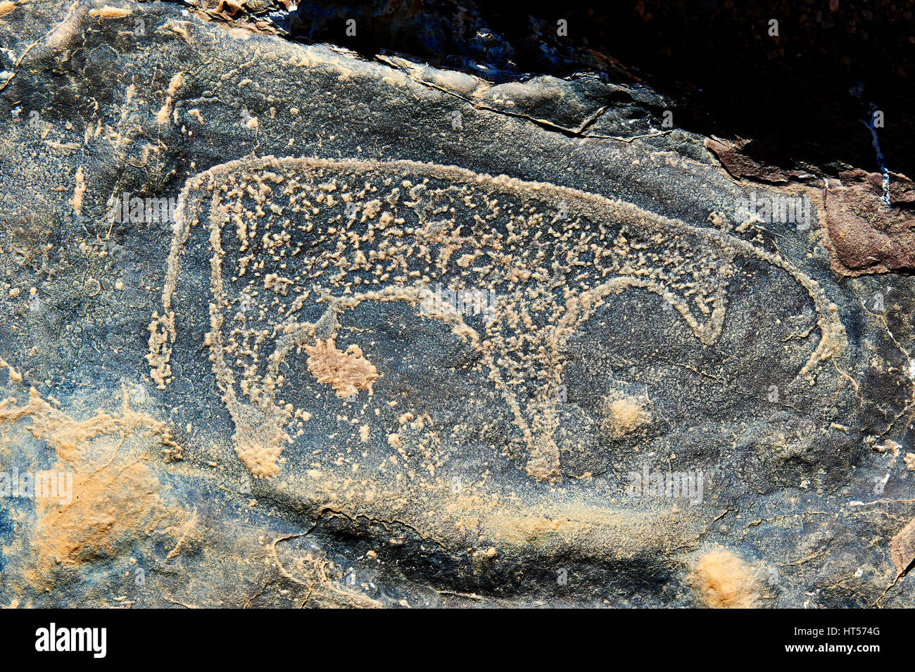 Prehistoric Saharan petroglyph rock art carvings of cattle from a site 20km east of Taouz, South Eastern Morocco Stock Photo