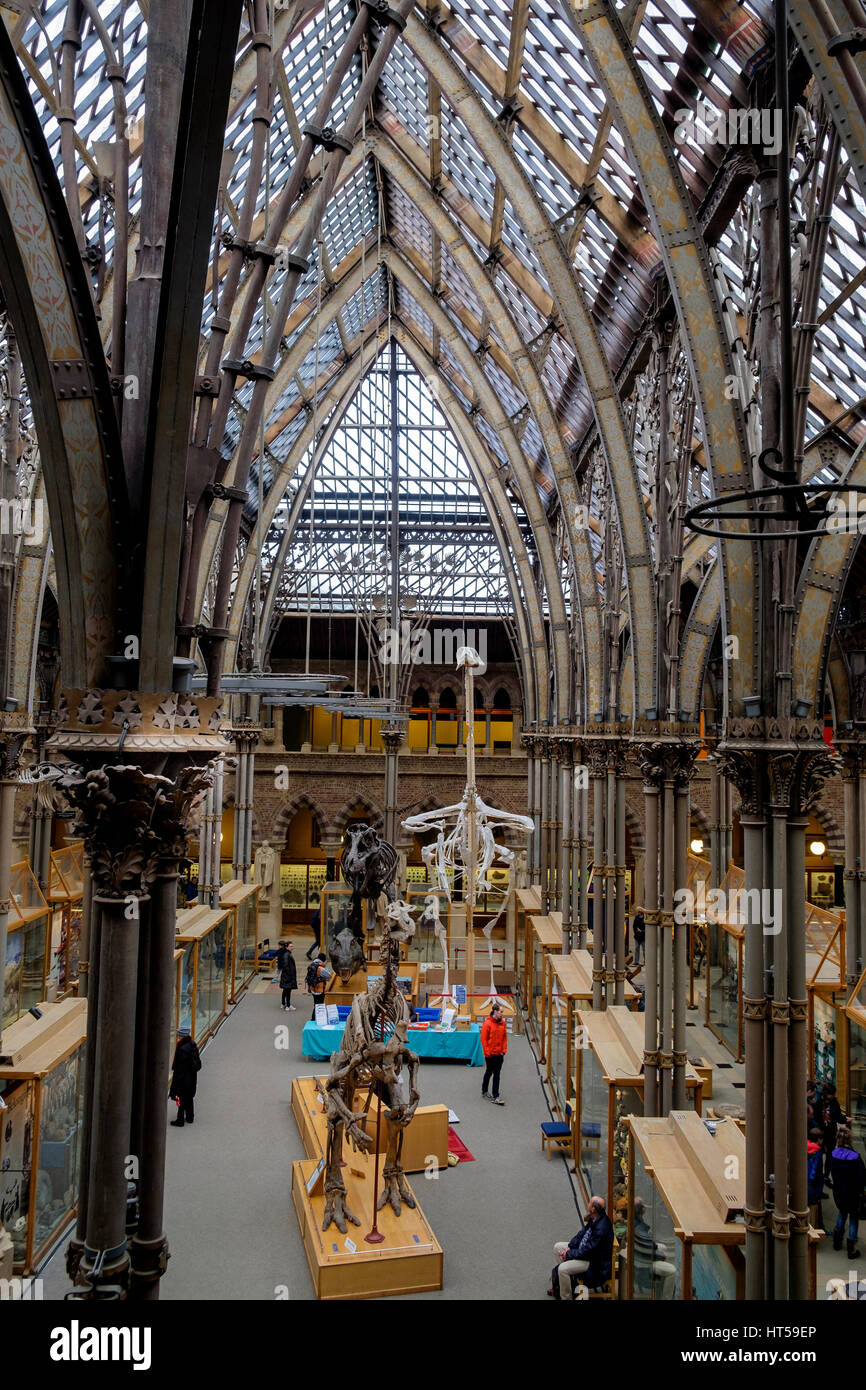 The Oxford University Museum Of Natural History Neo Gothic Architecture Designed By Thomas Newenham Deane
