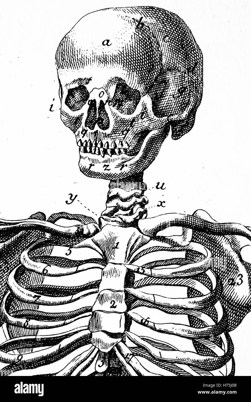 0beac09e9afec Skull Etching Stock Photos & Skull Etching Stock Images - Alamy