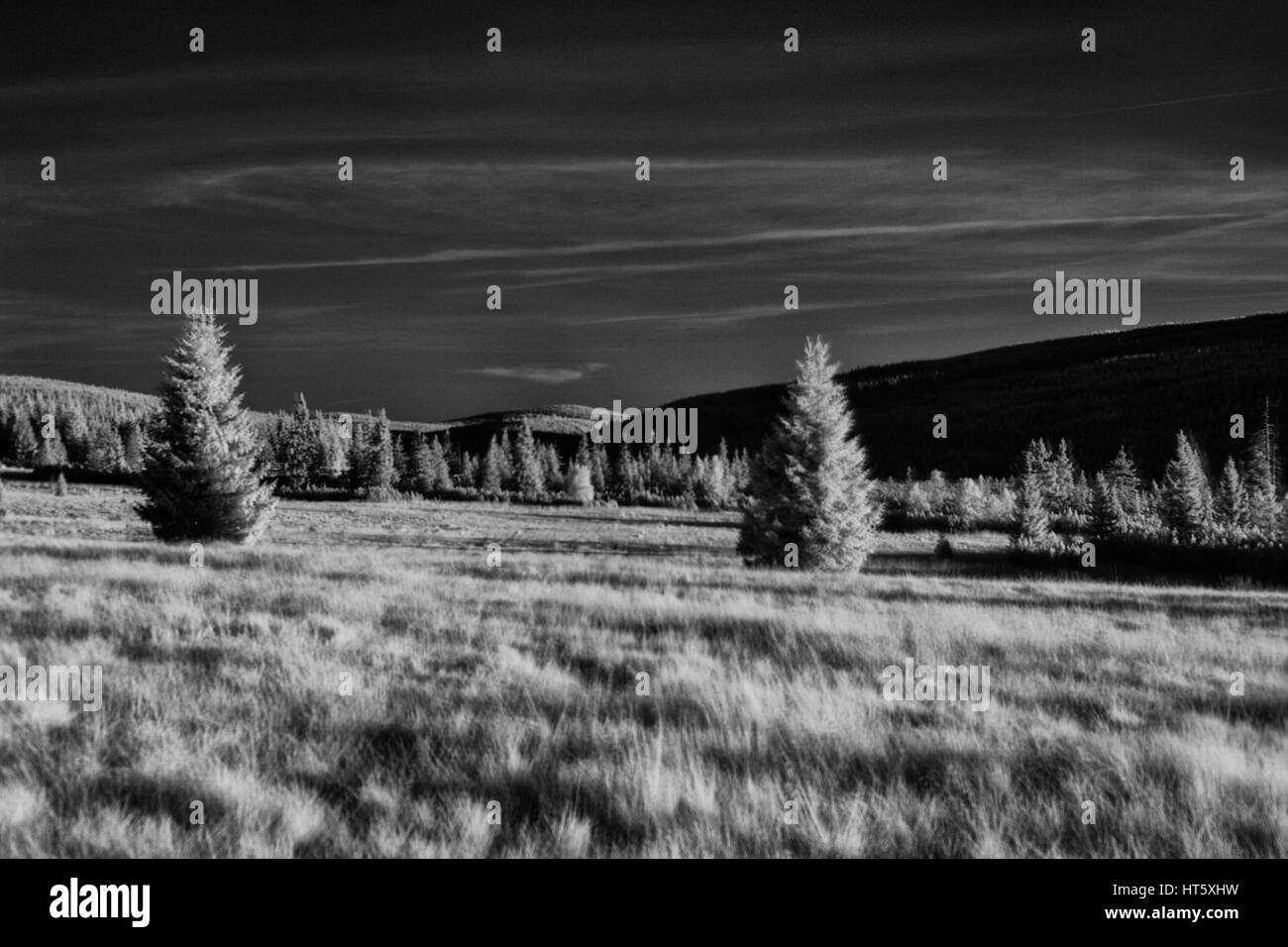 Infrared photography of trees and sky - Stock Image
