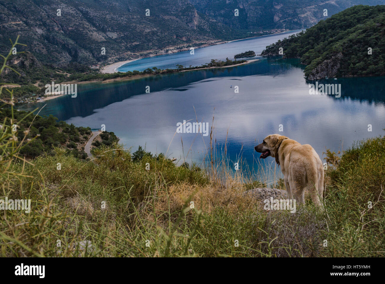 dog in oludeniz view,dog looking to the blue lagoon beach Stock Photo