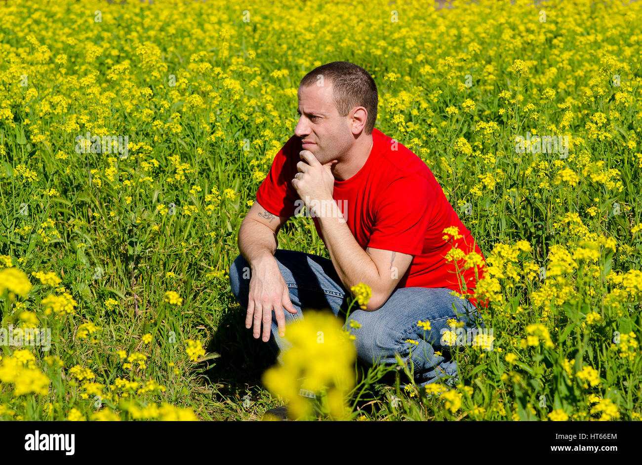 Man in a field of yellow flowers thinking of what tomorrow holds. - Stock Image