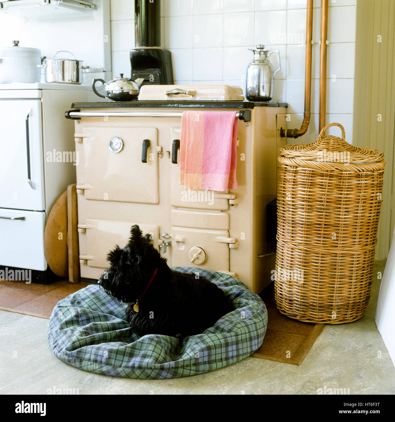 Dog on a dog bed in front of an oven. - Stock Image