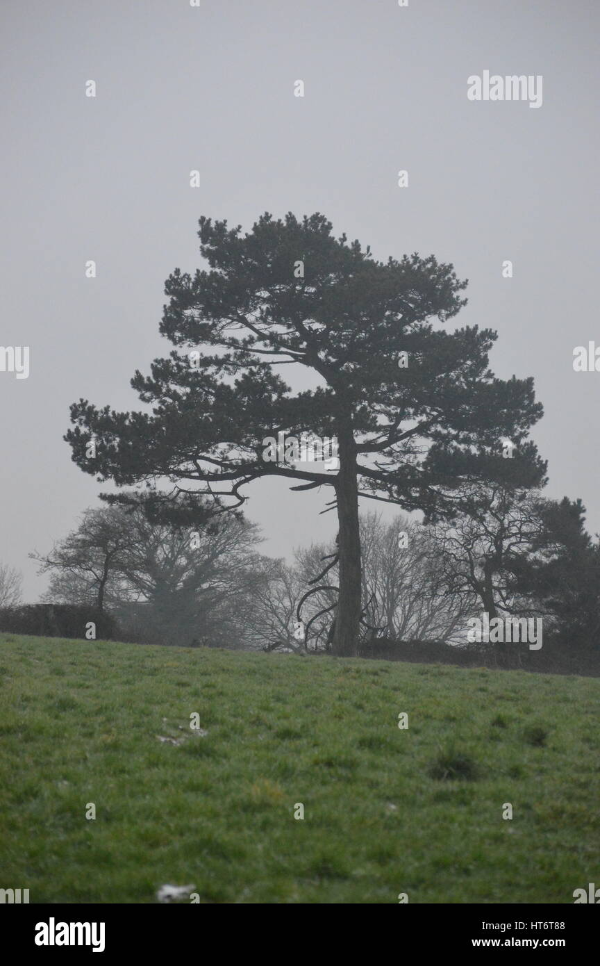 A tree in winter. - Stock Image