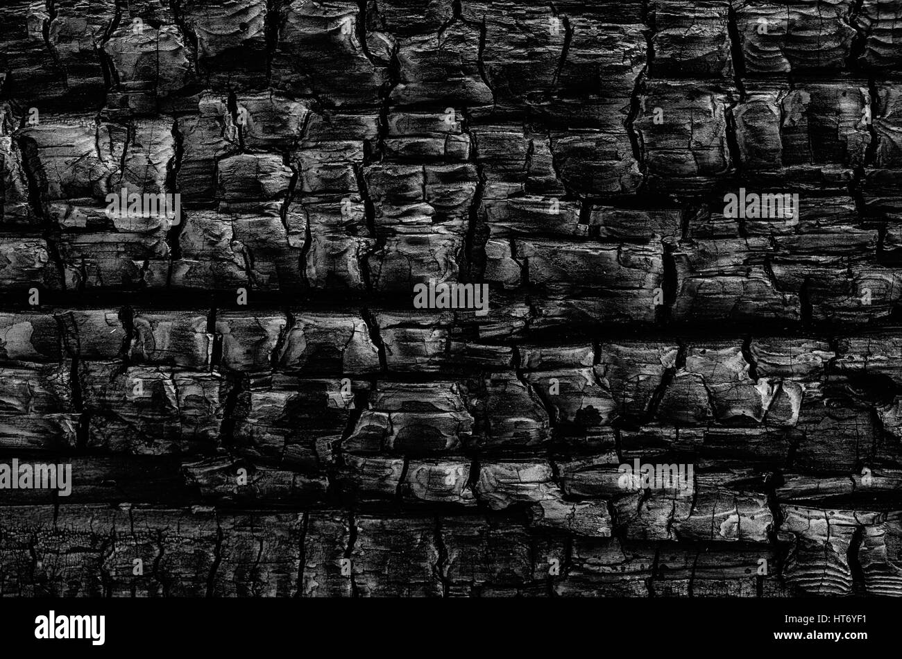 A natural abstract pattern of a wood  log burned in a fire creates a black and white tetured background. - Stock Image
