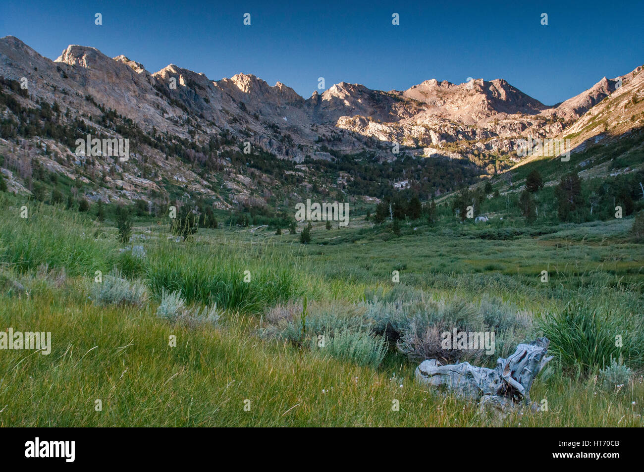 Lamoille Canyon in Ruby Mountains, near Elko, Nevada, USA - Stock Image