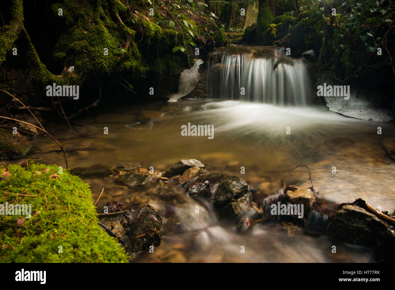 River in the forest close to Vevey, Switzerland - Stock Image