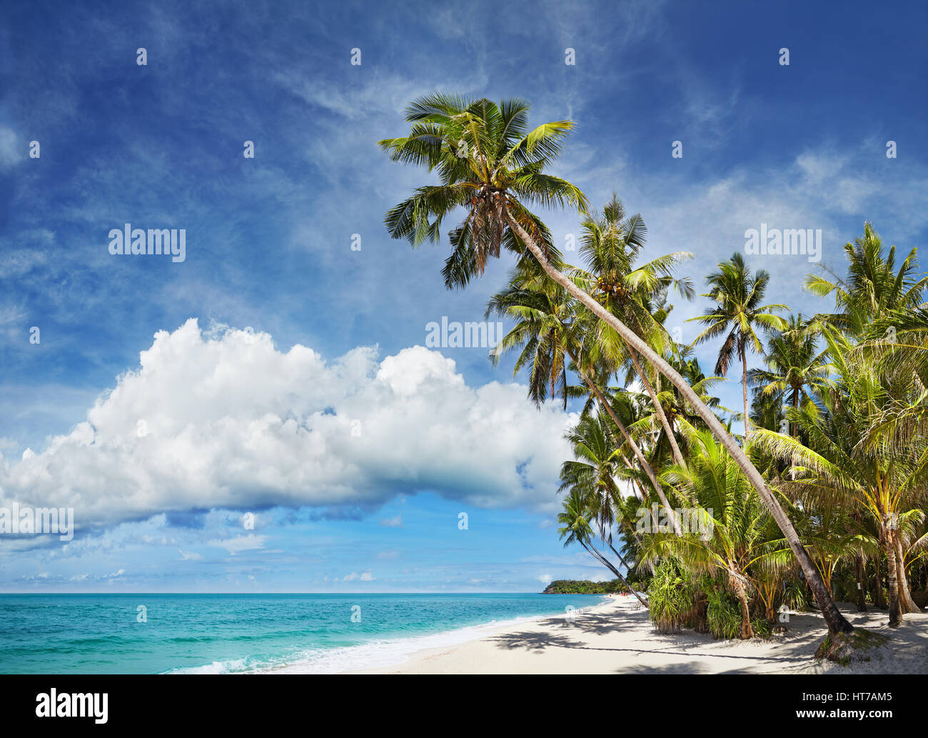 Tropical beach with palm trees and white sand - Stock Image