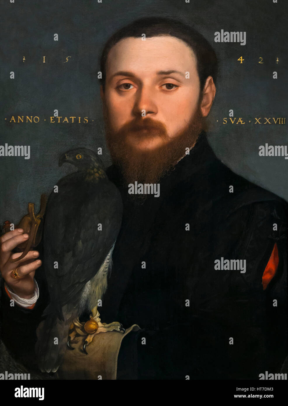 Portrait of a Nobleman with a Falcon, by Hans Holbein the Younger, 1542, Royal Art Gallery, Mauritshuis Museum, - Stock Image