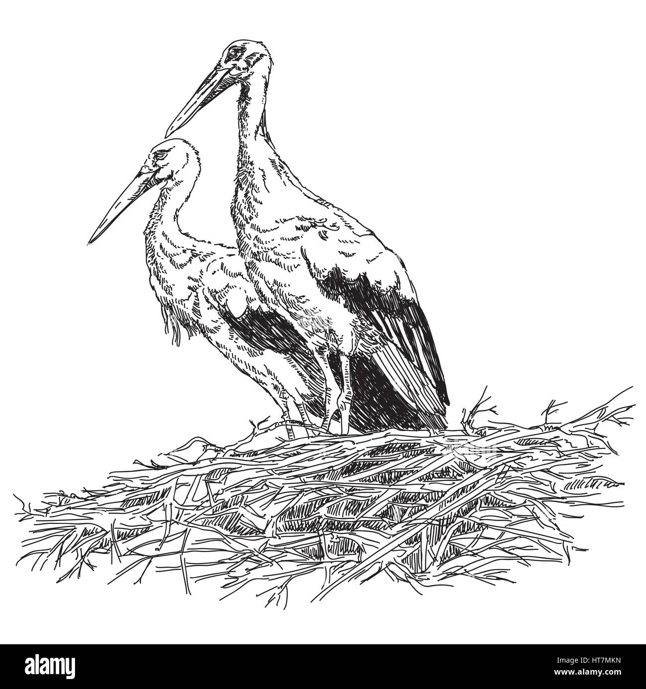 Pencil drawing Storks couple in the nest vector illustratoin - Stock Vector