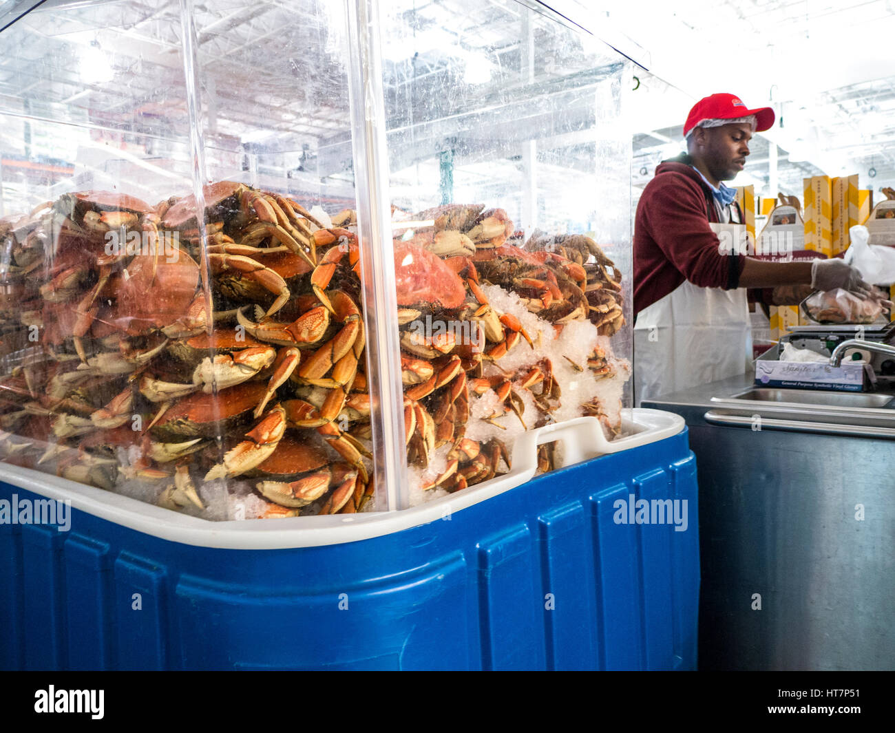 Dungeness crabs on sale in large wholesale store in San Francisco California USA - Stock Image