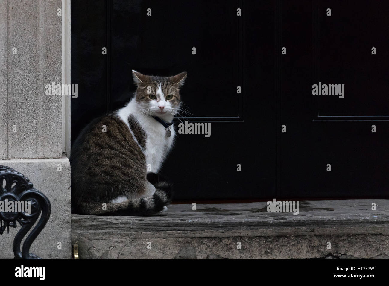 London, UK. 8th Mar, 2017. Larry the cat sits outside number 10 Downing Street Credit: Vickie Flores/Alamy Live - Stock Image