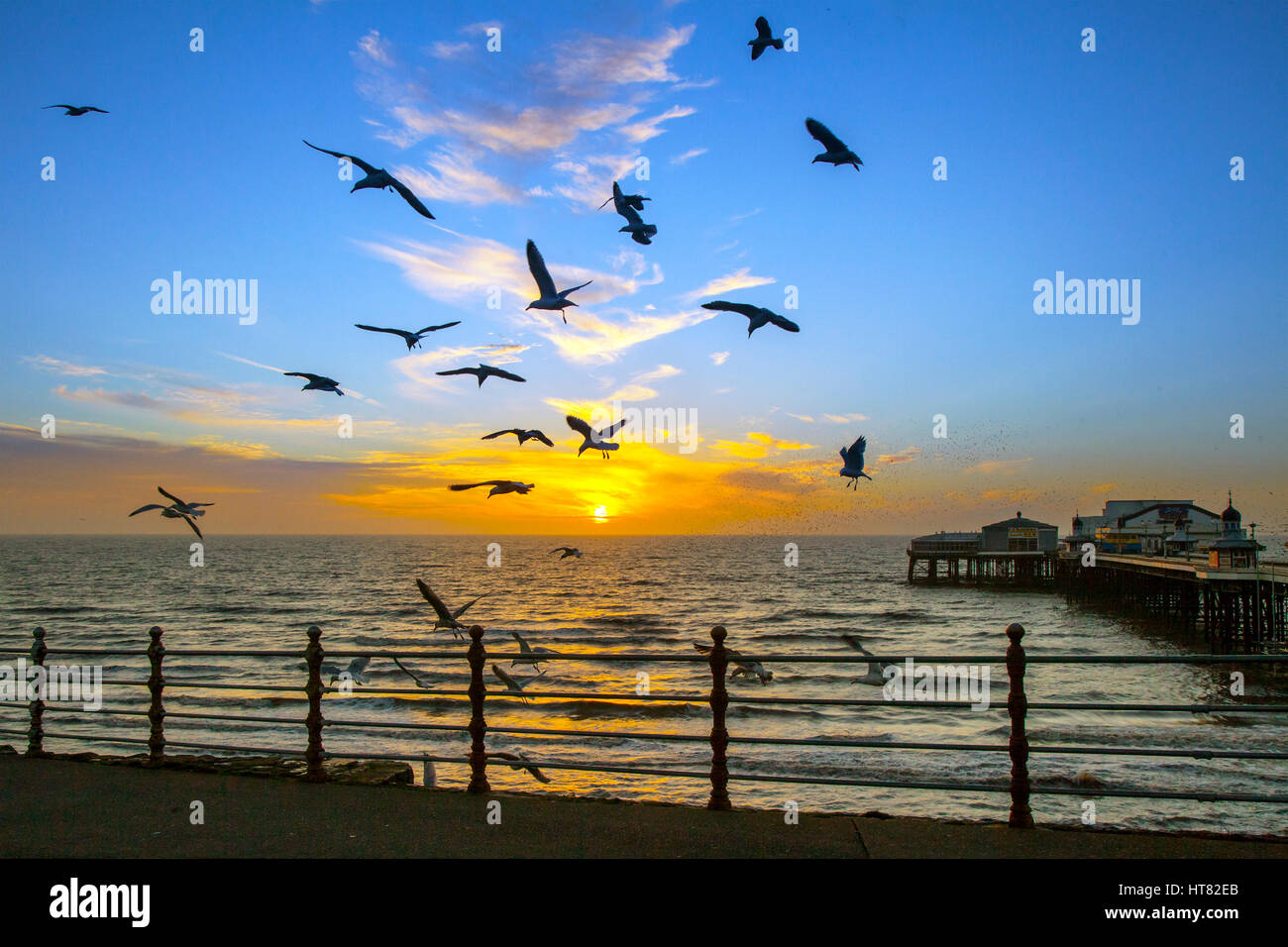 Blackpool, Lancashire, UK. 8th March, 2017. UK Weather: Golden sunset with seagulls on the seafront. Traditionally - Stock Image